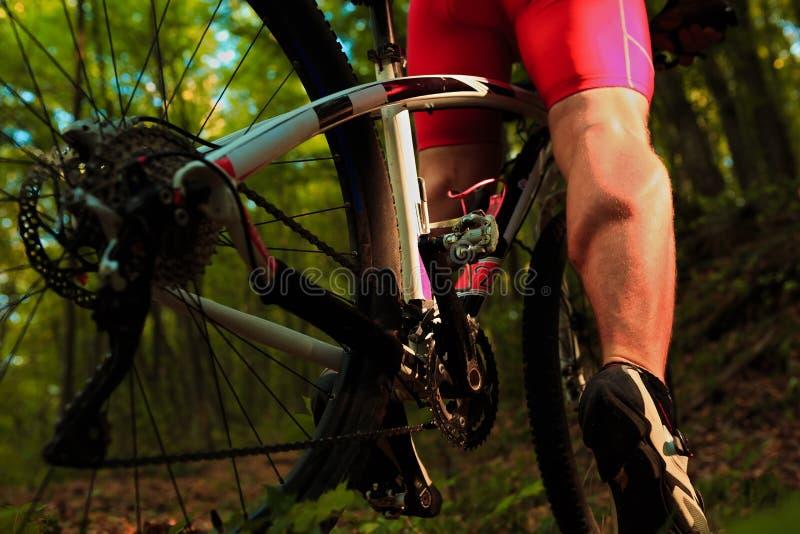 Fietser die op fiets in hout berijden stock fotografie