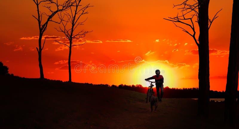 Fietser met een hond, die bij zonsondergang lopen stock fotografie