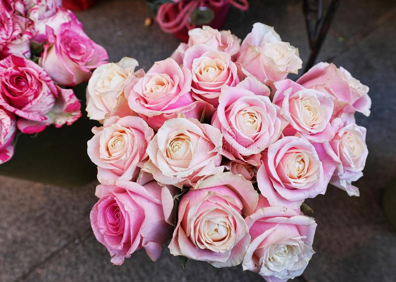 Fifteen pink roses in a vase royalty free stock image