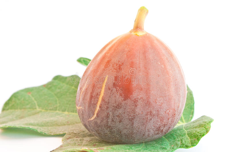 Download Fig fruit stock image. Image of fresh, organic, nutrition - 18493935