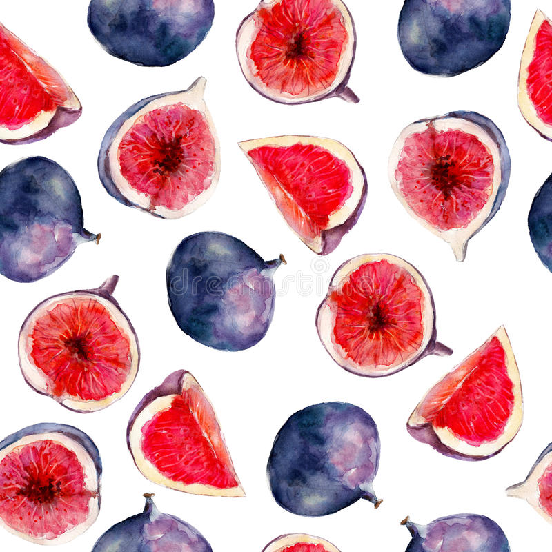 Fig fruit watercolor seamless pattern. Bright tropical fruit isolated on white background. Fig fruit watercolor seamless pattern. Bright tropical fruit isolated stock illustration