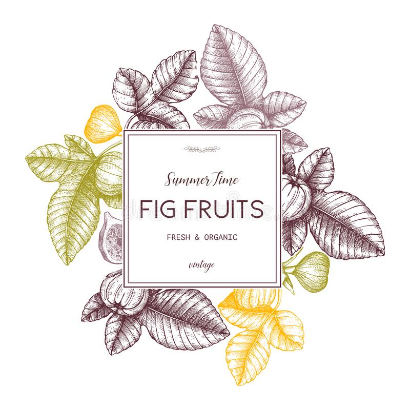 Vector design with hand drawn figs sketch. Vinatge frame with botanical illustration of fig fruit branch. Retro template with summ stock illustration