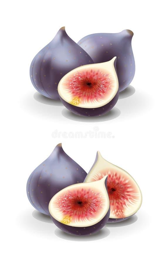 Fig.illustratie vector illustratie