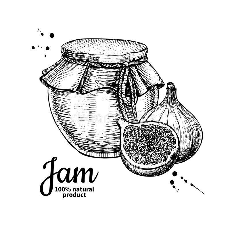 Fig jam glass jar vector drawing. Fruit Jelly and marmalade. H. And drawn food illustration. Sketch style vintage objects for label, icon, packaging design royalty free illustration