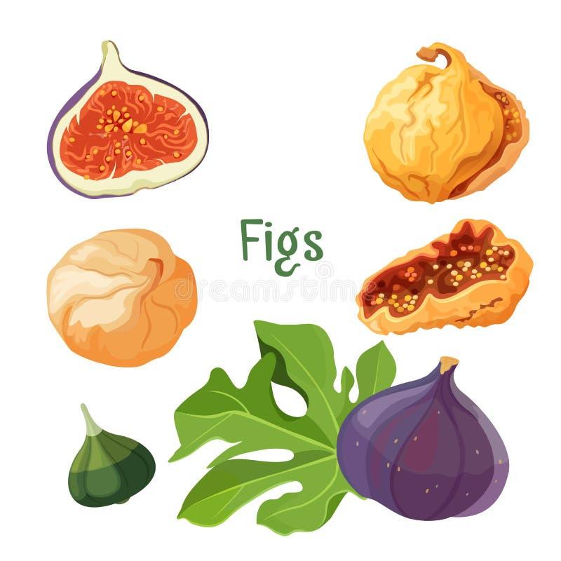 Fig.types van vectorillustratie van de installatie de droge en verse affiche stock illustratie