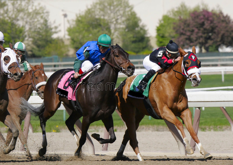 Fight to the Finish. A chestnut thoroughbred breaks ahead of his rivals in a thoroughbred race royalty free stock photography