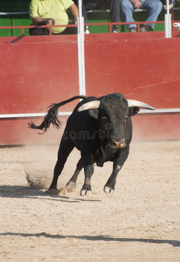 Download Fighting bull stock image. Image of entertainment, aggressive - 11338339
