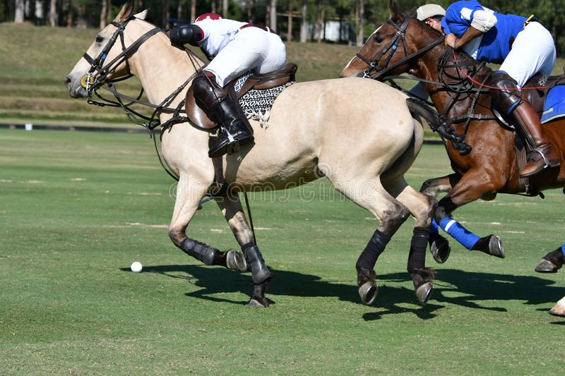 Fighting with horse polo stock photos