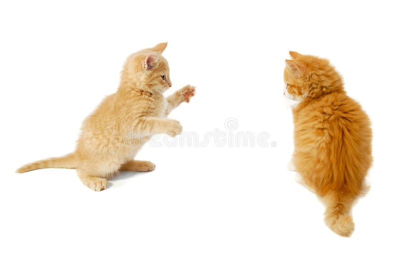 Fighting kittens royalty free stock photo
