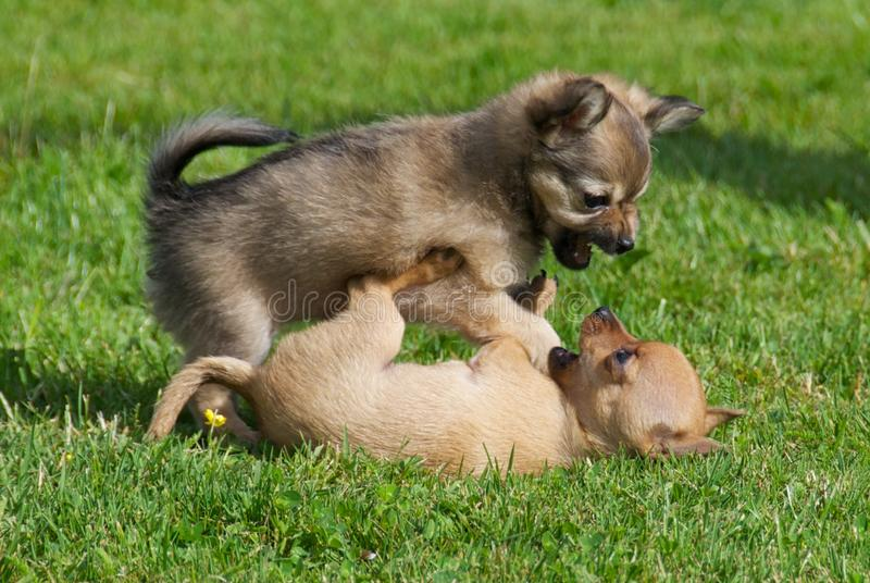 Image result for puppies fighting