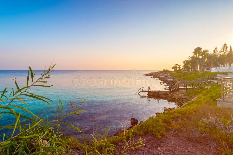 Figi drzewa zatoki plaża w Protaras, Cypr obrazy royalty free
