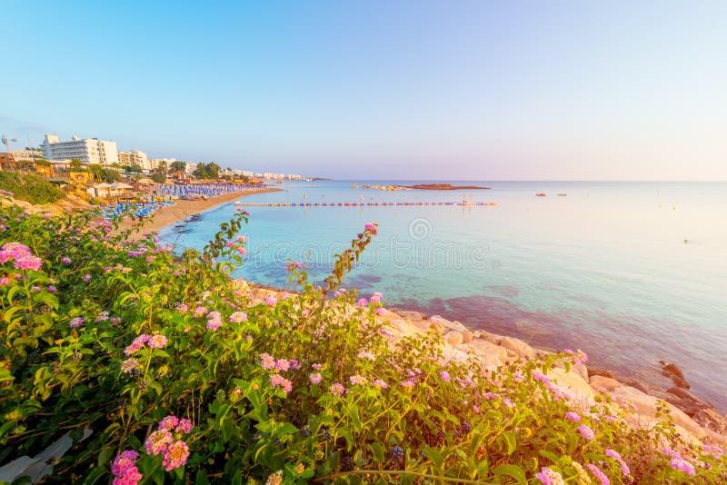 Figi drzewa zatoki plaża w Protaras, Cypr zdjęcia royalty free