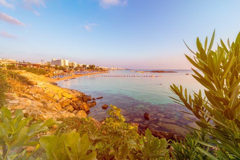 Figi drzewa zatoki plaża w Protaras, Cypr zdjęcie stock