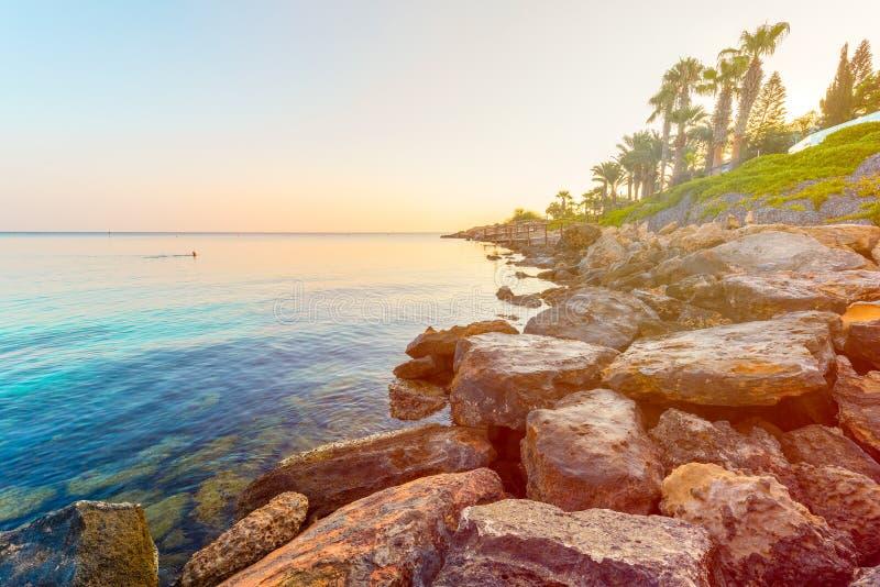 Figi drzewa zatoki plaża w Protaras, Cypr zdjęcia stock