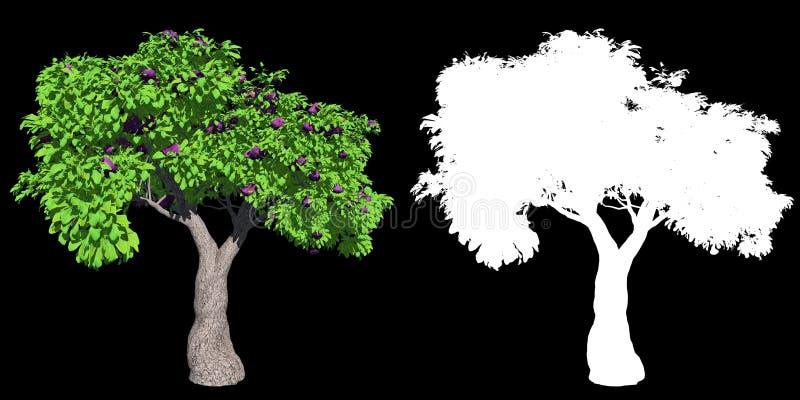 Figi drzewo odizolowywaj?cy z wysoko?? wyszczeg?lniaj?cymi li??mi obraz stock