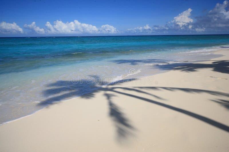 Figi-isole fotografia stock