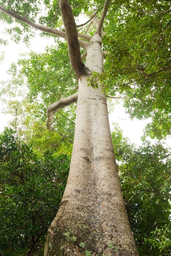 Figi roślinność i drzewo zdjęcia stock