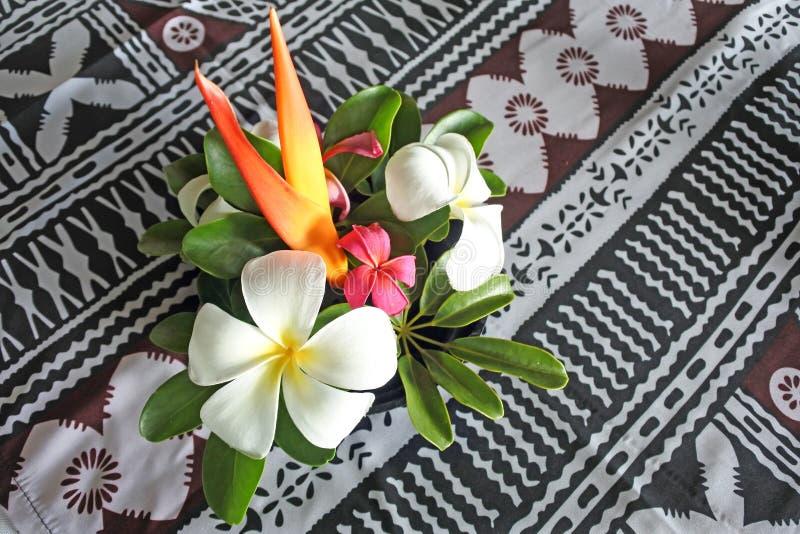 Figi tropicali del bokeh dei fiori delle isole del Pacifico fotografia stock