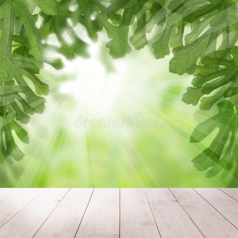 Figi zieleni liście z światła słonecznego tłem obraz stock