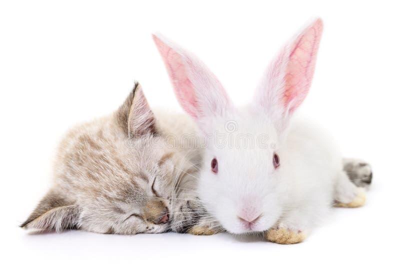 Figlarka bawić się z królikiem obraz royalty free