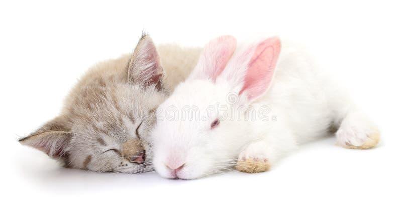 Figlarka bawić się z królikiem zdjęcie stock