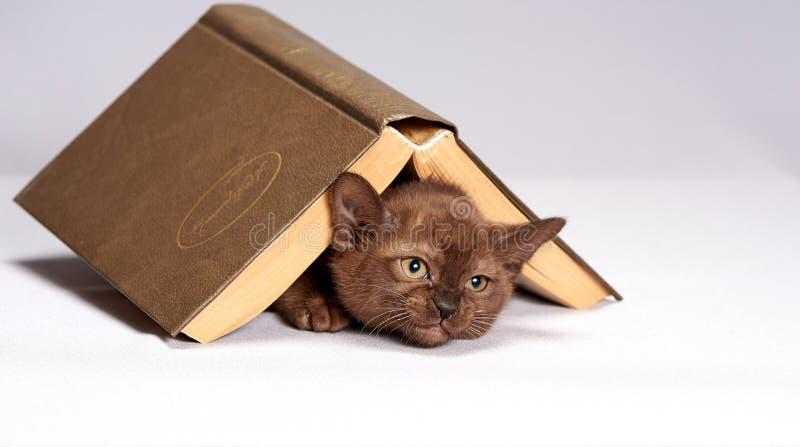 Figlarka chuje pod książką zdjęcie stock