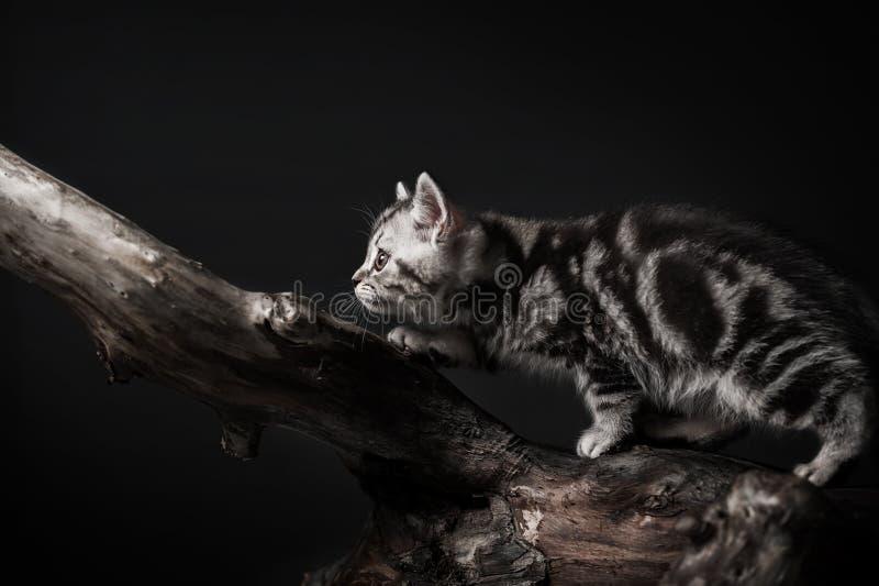 Figlarka na driftwood fotografia royalty free