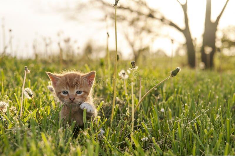 Figlarka w trawie obraz stock