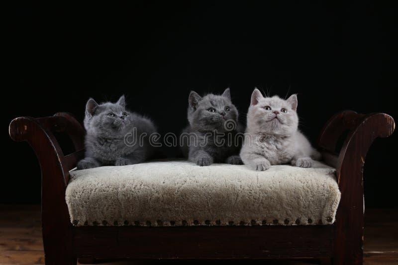 Figlarki siedzi na stolec, drewniany tło zdjęcia stock