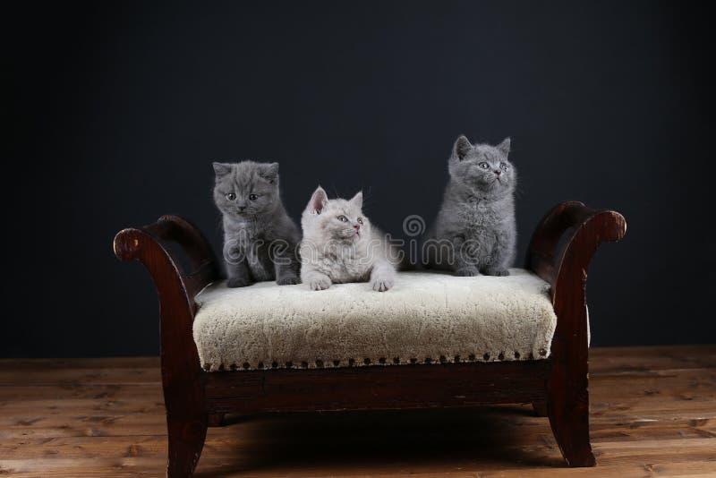 Figlarki siedzi na stolec, drewniany tło fotografia royalty free