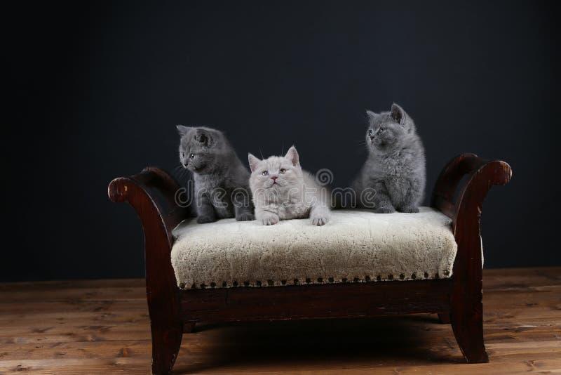 Figlarki siedzi na stolec, drewniany tło zdjęcia royalty free