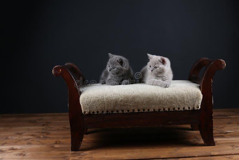 Figlarki siedzi na stolec, zbliżenie widok zdjęcia royalty free