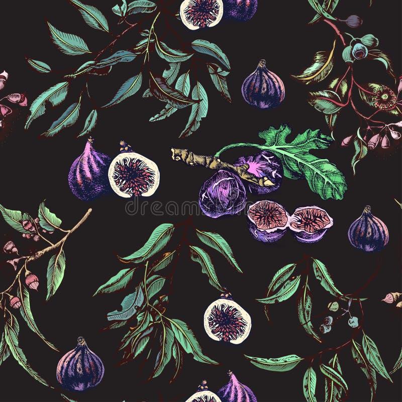 Figo do vetor e teste padr?o tirados m?o do eucalipto Cart?o com fruto e folhas ilustração royalty free