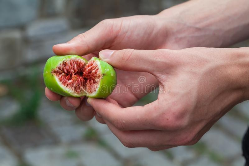 Figos verdes maduros frescos imagens de stock