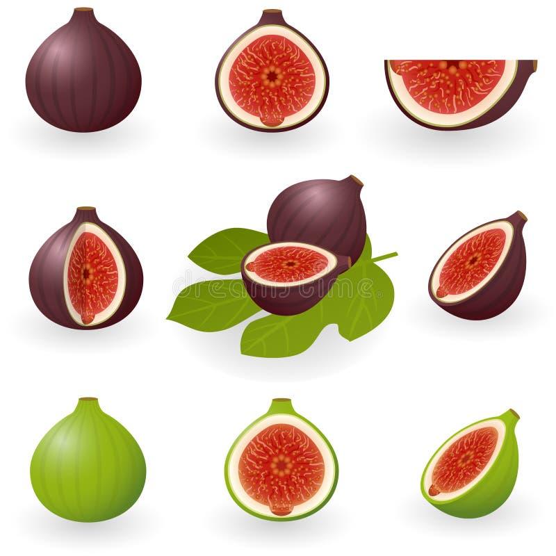 figs vektor illustrationer