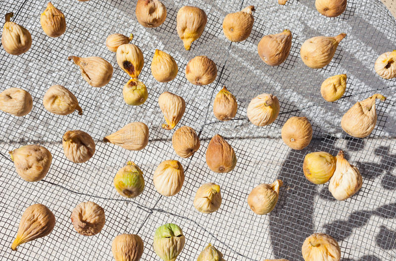 Figs drying in the sun, Spain stock image