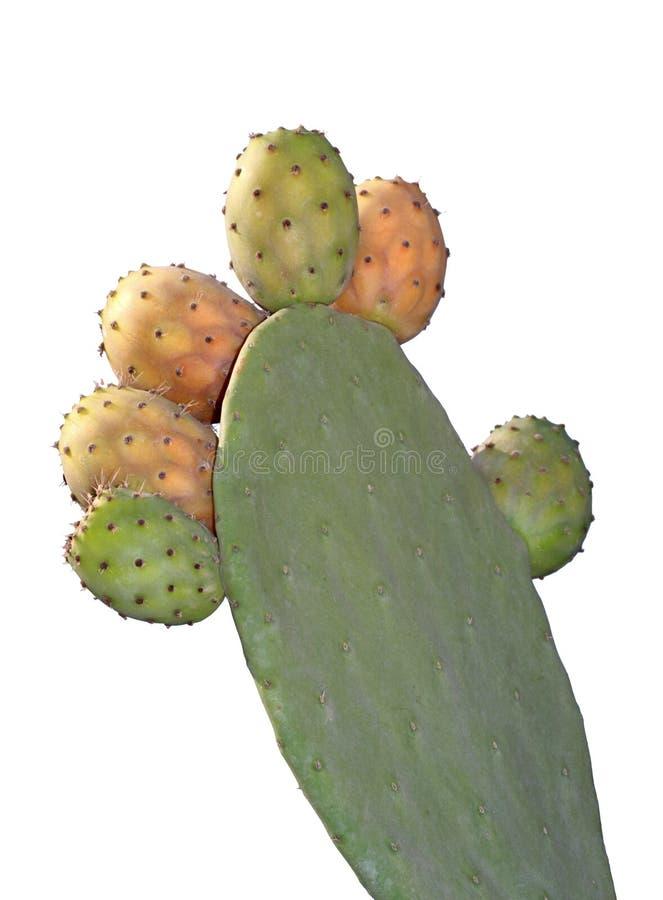 Figue de Barbarie sur un cactus (Figue de cactus) photographie stock libre de droits