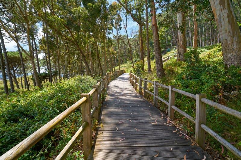 Figueiras beach wood runway in Islas Cies island stock photography