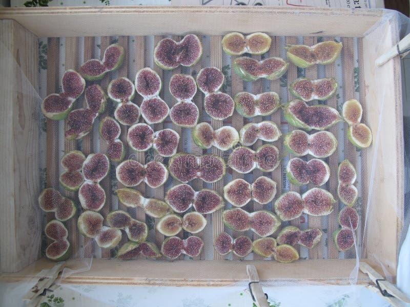 figues naturellement sèches sous le soleil d'été images libres de droits