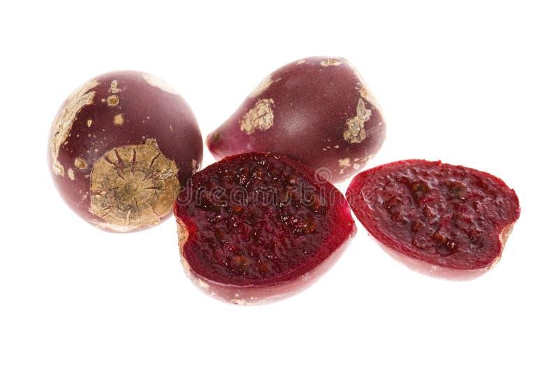 Figuier de de barbarie (opuntia ficus-indica) photographie stock