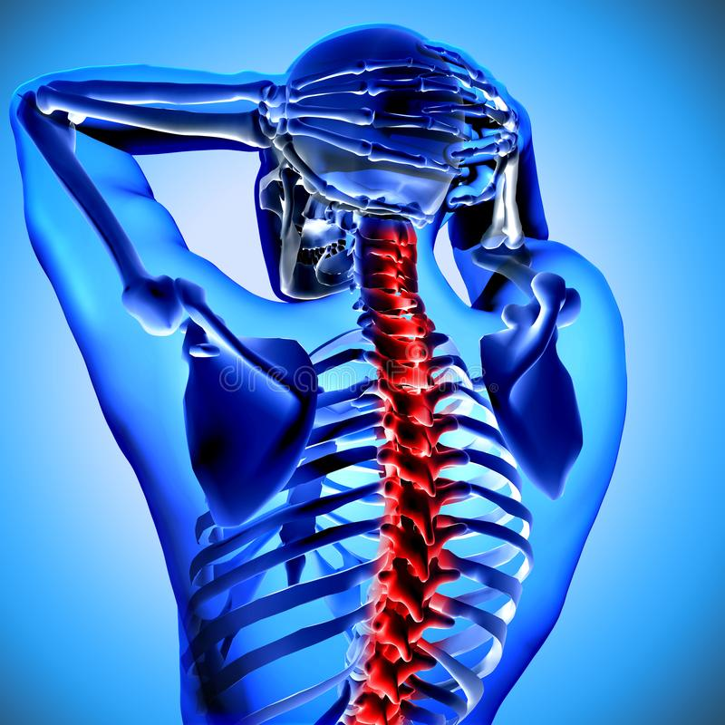 figura 3d médica com os ossos de pescoço destacados ilustração stock