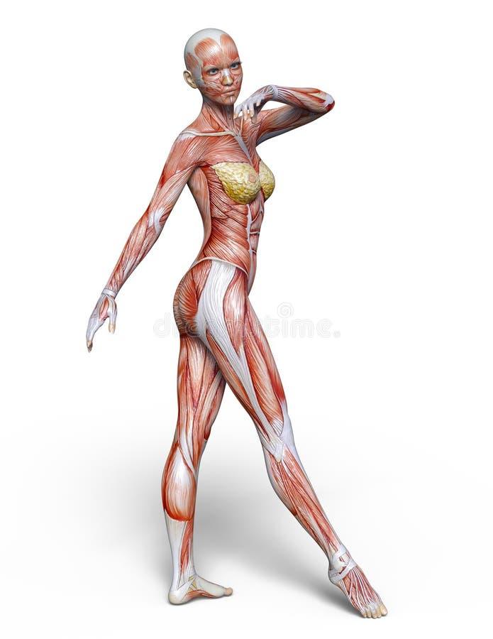 Figura de endecha femenina stock de ilustración