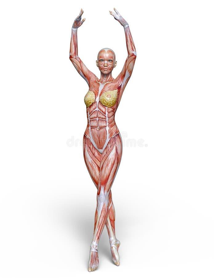 Figura de endecha femenina ilustración del vector