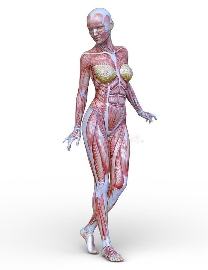 Figura de endecha femenina libre illustration