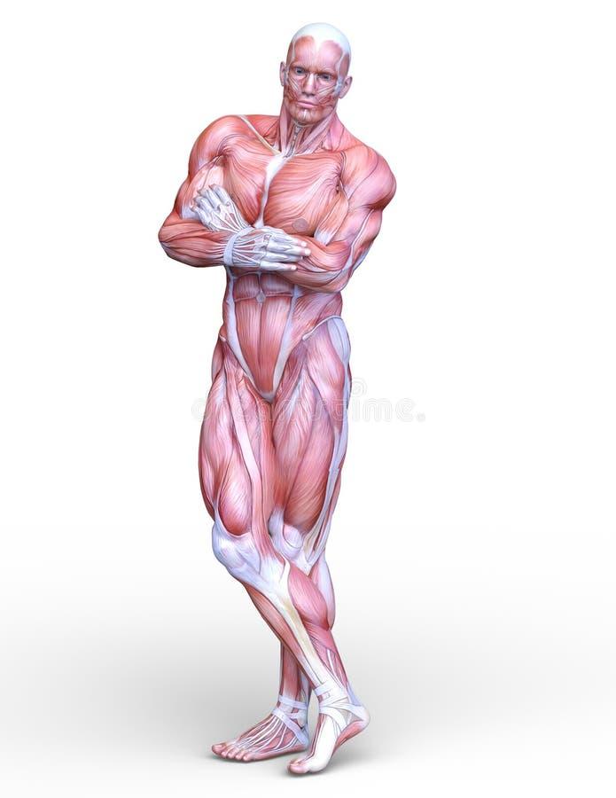 Figura de endecha masculina ilustración del vector