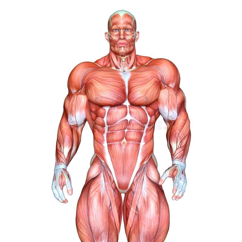 Figura de endecha masculina libre illustration