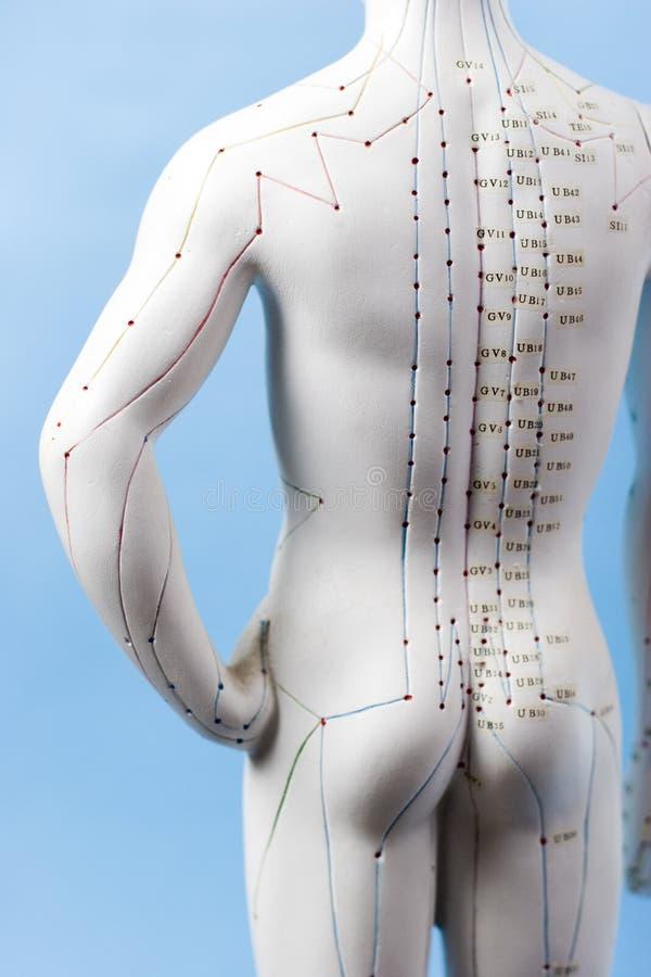 Figura de la acupuntura fotografía de archivo