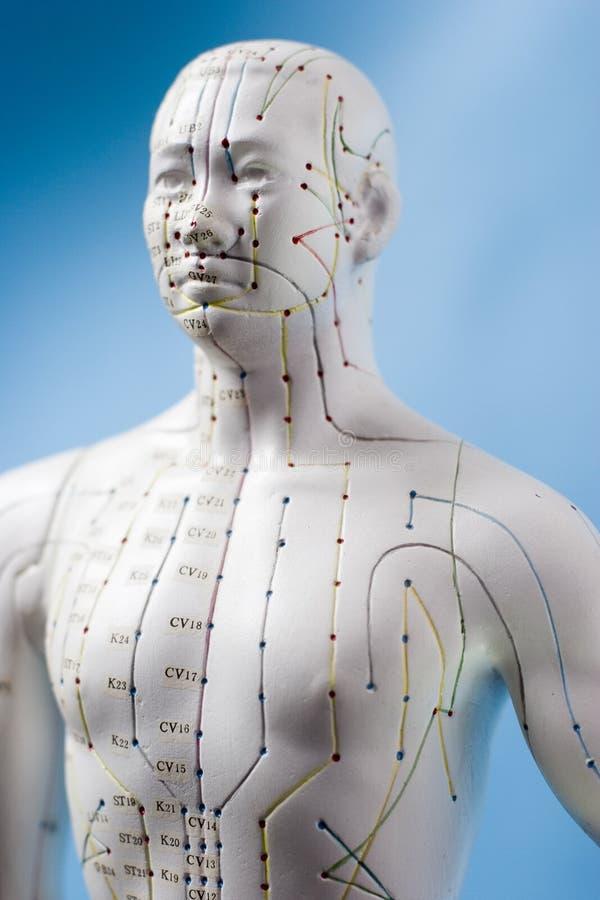 Figura de la acupuntura imagen de archivo libre de regalías