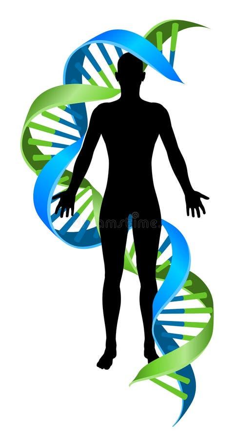 Figura del ser humano del filamento del cromosoma de la DNA del doble hélice ilustración del vector
