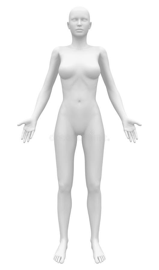 Figura fêmea da anatomia vazia - vista dianteira ilustração royalty free